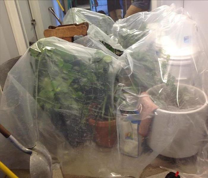 House plants under protective plastic