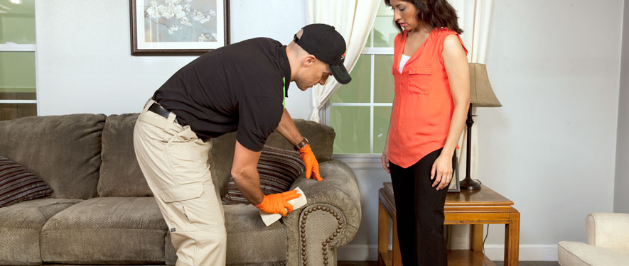 Elmwood Park, IL carpet upholstery cleaning